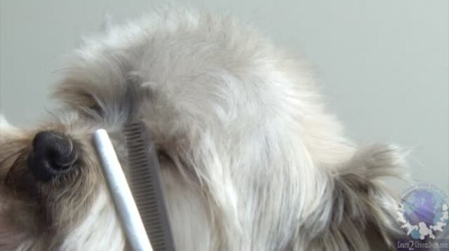 Thumbnail for Trimming a Pet Yorkie Head Style
