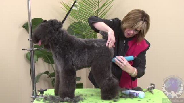 Thumbnail for Setting the Rear Assembly of a Pet Trim on a Kerry Blue Terrier