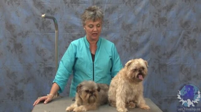 Thumbnail for Grooming a Pet Brussels Griffon with Judy Hudson, NCMG