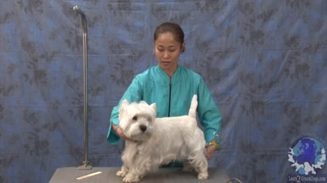 Thumbnail for Grooming a Pet Westie with a Show Dog Comparison (1 of 6-Part Series)