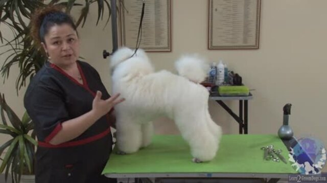 Thumbnail for What Does Elegance Mean in a Poodle?
