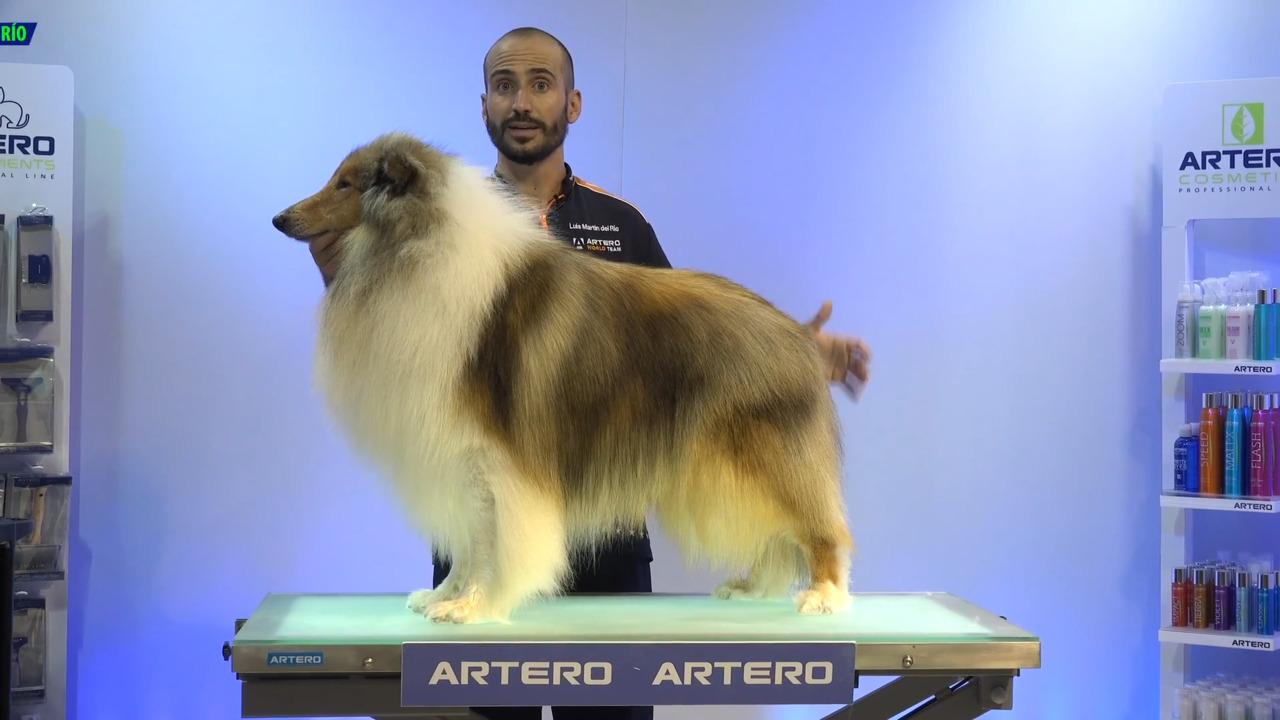 Thumbnail for Baño y Mantenimiento para perros de doble capa