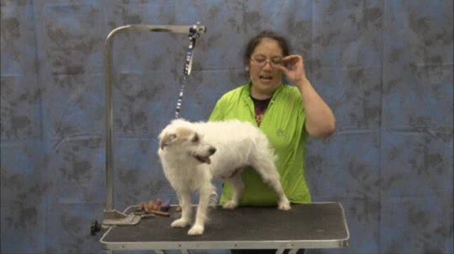 Thumbnail for Grooming a Parson Terrier