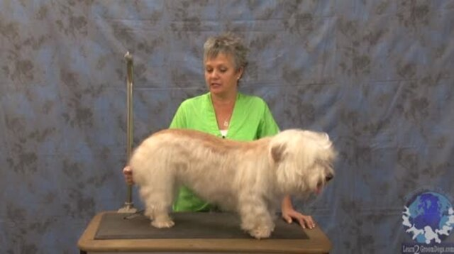 Thumbnail for Getting 'er Done Series: Grooming a Pet Glen of Imaal Terrier
