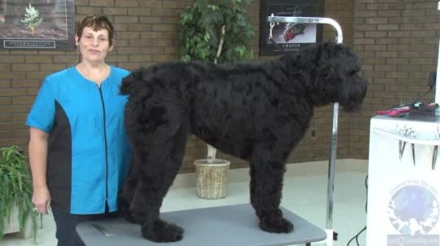 Thumbnail for Grooming a Black Russian Terrier