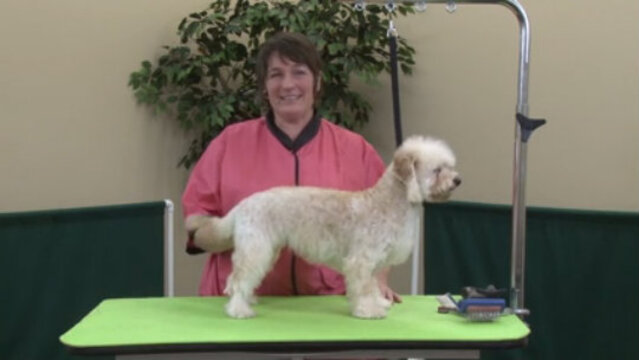 Thumbnail for Creating a Dandie Trim Style on a Mixed Breed
