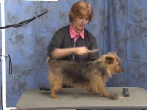 Thumbnail for Grooming the Australian Terrier