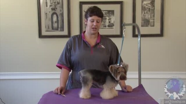 "Thumbnail for Grooming a Yorkie in a Personality Trim ""Bella-Bottom Trim"" (1 of 2-Part Series)"