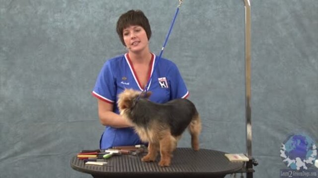 Thumbnail for Grooming the Australian Terrier (1 of 3-Part Series)
