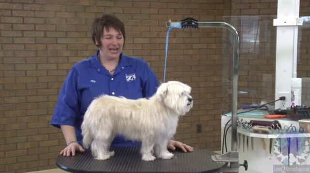 Thumbnail for Grooming the Westie Mix