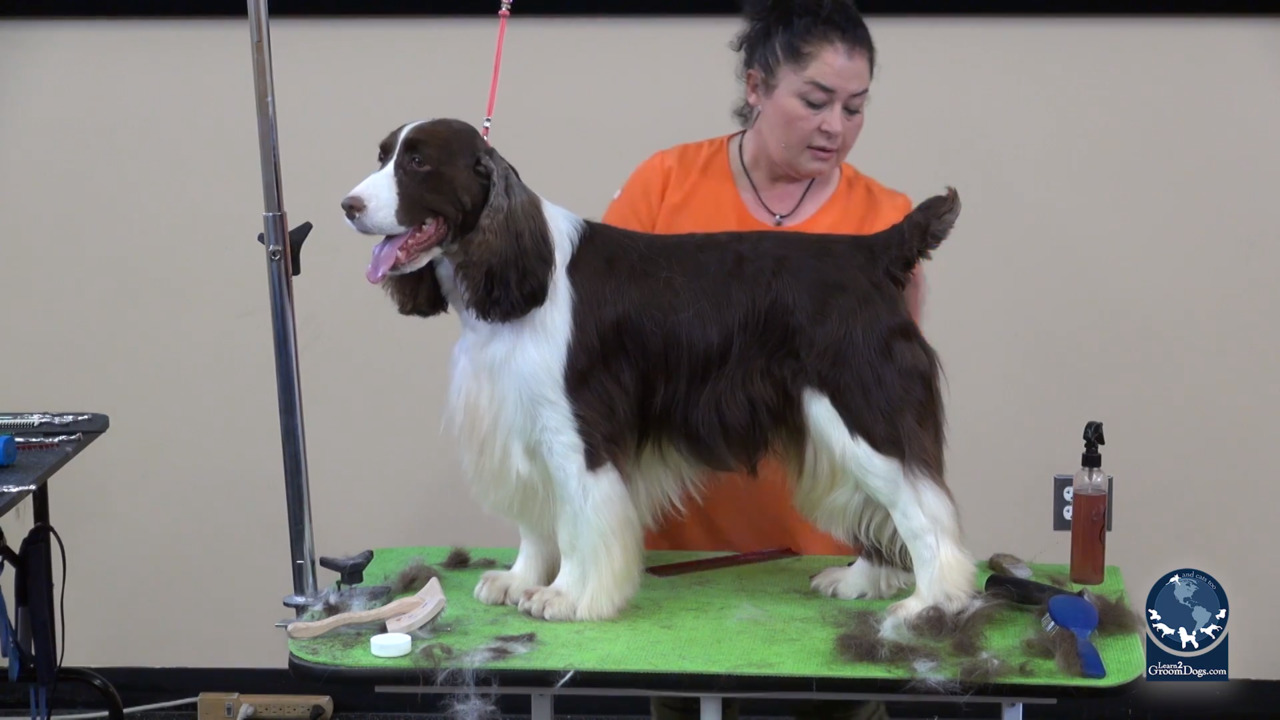 Thumbnail for Spotlight Session: Styling the Rear Assembly and Tail of an English Springer Spaniel