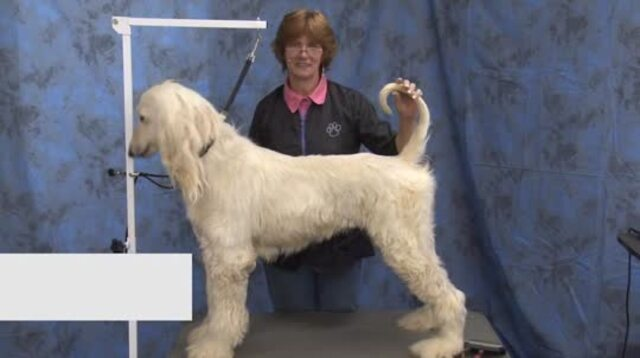 Thumbnail for Grooming the Pet Afghan in a Low Maintenance Trim