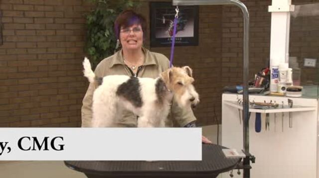 Thumbnail for Grooming the Pet Wire Fox Terrier (1 of 2-Part Series)