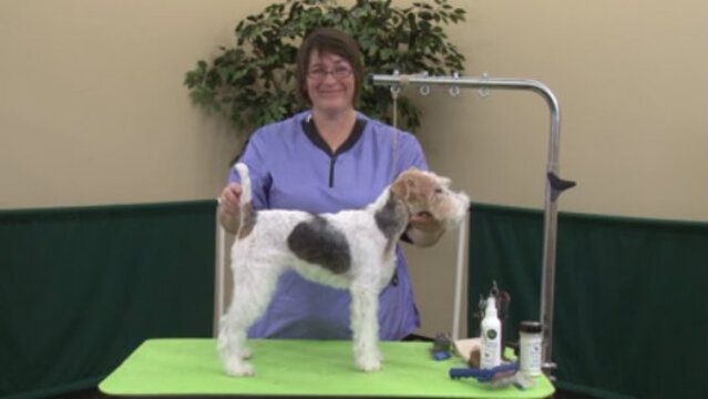 Thumbnail for How to Do a Pet Hand Strip on a Wire Fox Terrier