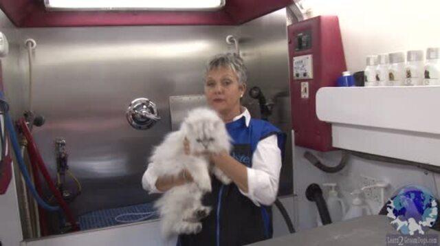 Thumbnail for Cat Rake n Vac