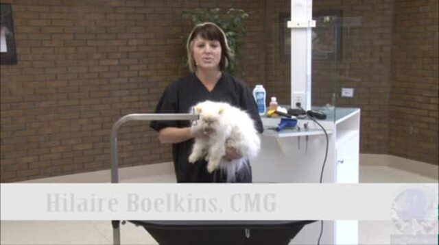 Thumbnail for Grooming the Long Haired Cat