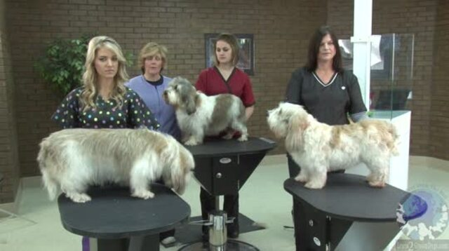 Thumbnail for Learn How to Read the AKC Book & Apply the Standard to 3 Dogs of the Same Breed
