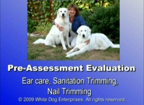Thumbnail for Pre-Assessment Evaluation: Plus Ear, Nails, and Sanitation Trimming