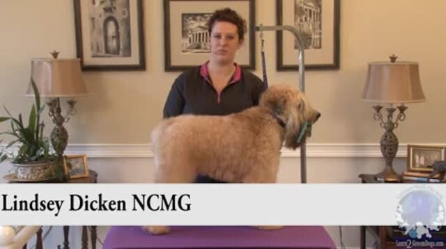 Thumbnail for Grooming the Soft Coated Wheaten Terrier in a Show Trim (1 of 2-Part Series)