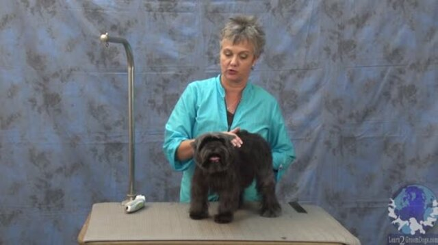 Thumbnail for Getting 'er Done Series: Grooming a Pet Affinpincher