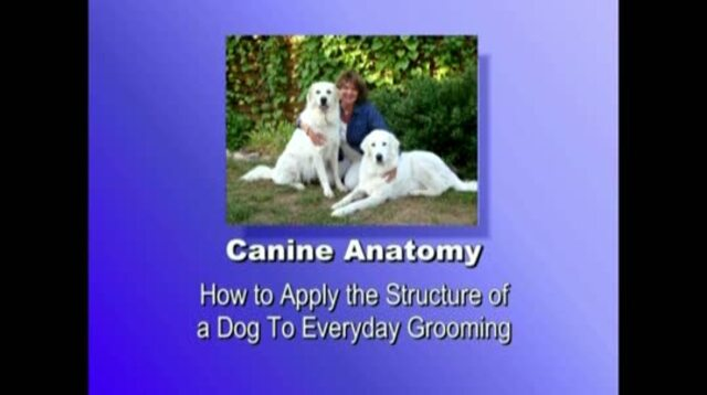 Thumbnail for Canine Anatomy