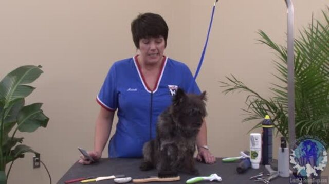 Thumbnail for How to Handstrip a Cairn Terrier Using the 50/50 Method