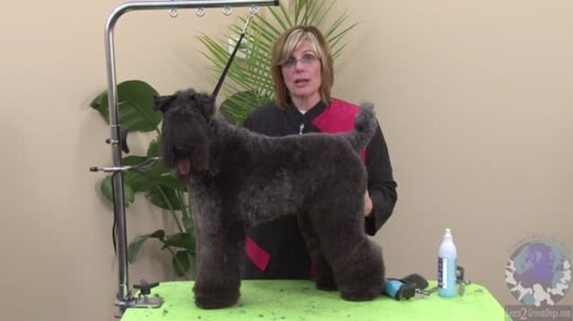 Thumbnail for Grooming the Kerry Blue Terrier for Grooming Competition of Pet Salon Styling (Part 1 of 4-Part Series)