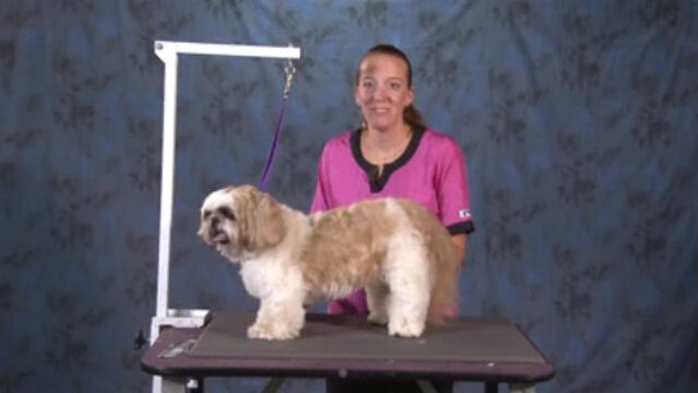 Thumbnail for How to do a Cute & Easy Trim on an Older Shih Tzu (Part 1 of 2-Part Series: Trimming the Body and the Legs)