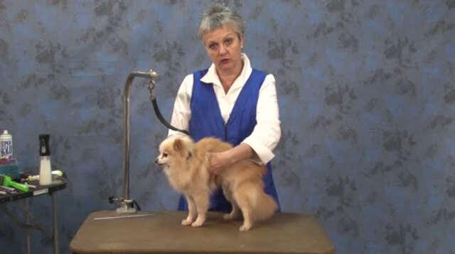 Thumbnail for How to Create a Lion Trim on a Pet Pomeranian