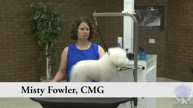 Thumbnail for Grooming the Pet Bichon in a Modified Show Trim