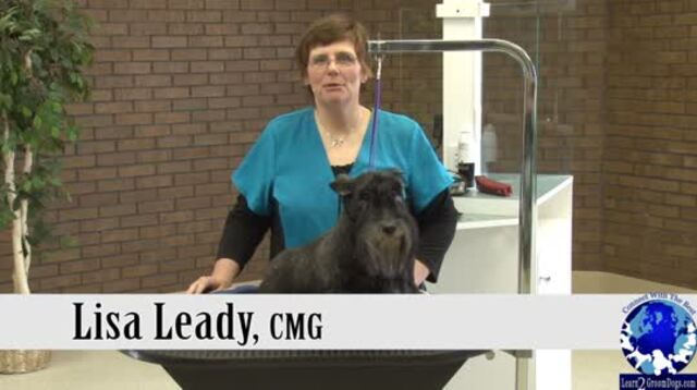 Thumbnail for Grooming the Pet Scottish Terrier