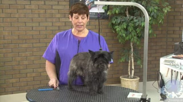 Thumbnail for Grooming the Cairn Terrier with Suesan Watson (Part 1 of 4-part Series)