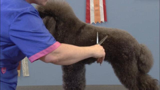 Thumbnail for Talking Shears with Karen Tucker