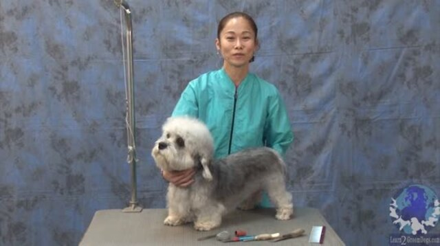 Thumbnail for Grooming a Pet Dandie with a Show Dog Comparison (Part 1 of 3-Part Series)