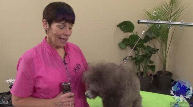 Thumbnail for Trimming the Face, Feet & Tail on a Young Show Poodle