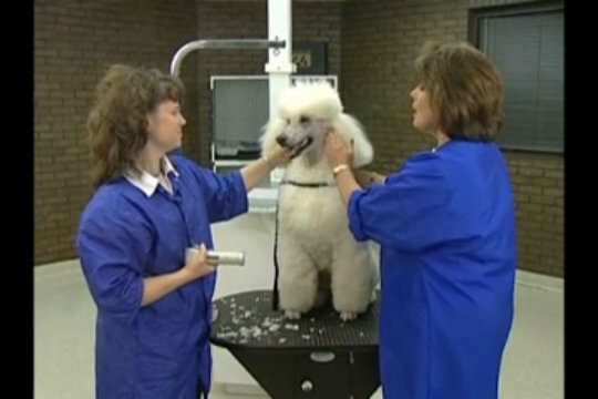 Thumbnail for Clipping the Poodle Face