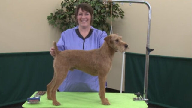 Thumbnail for Hand Stripping a Pet Irish Terrier