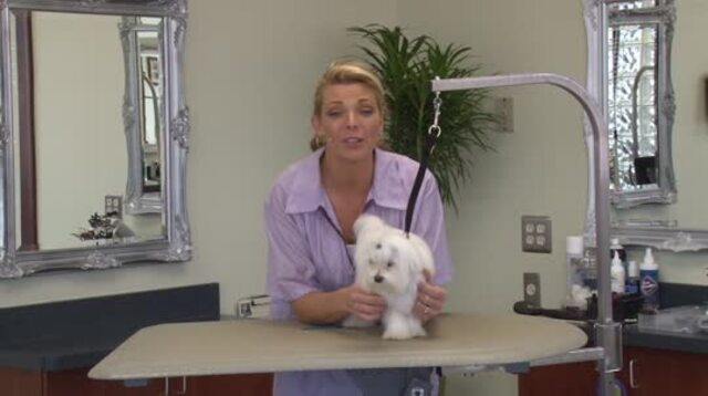 Thumbnail for Grooming a Maltese Puppy