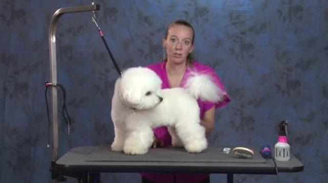 Thumbnail for Quick n Easy Pet Bichon Trim: (Part 1 of 2-Part Series)