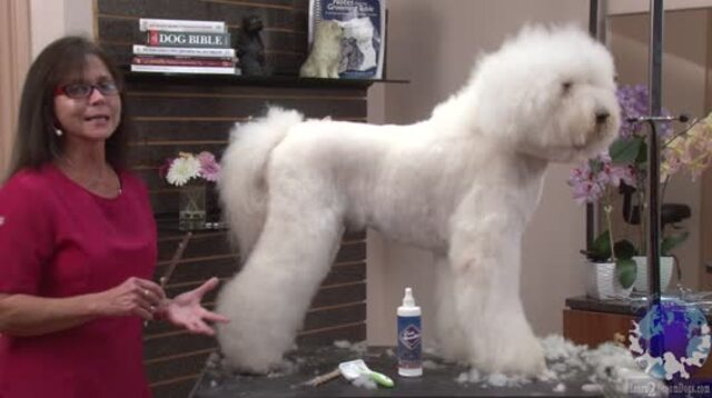 Thumbnail for Kathy's General Rules When It Comes to Grooming Any Scissored Dog