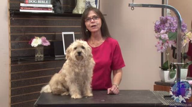 Thumbnail for Everyday Salon Styles: Terrier Mix Makeover (1 of 3-Part Series)