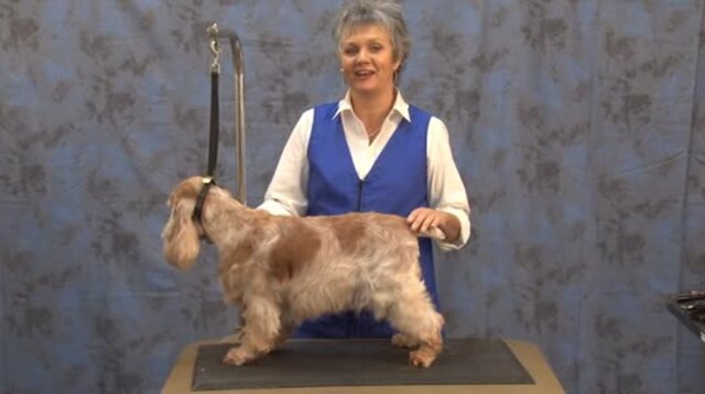 Thumbnail for Grooming the English Cocker Spaniel