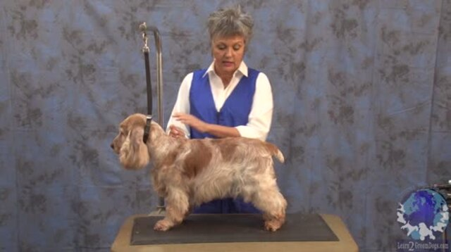 Thumbnail for Carding Sporting Dog Coats for Beginners