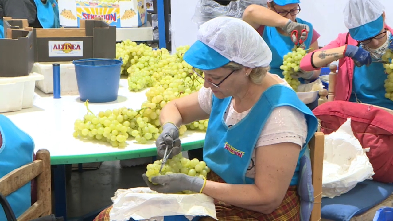 Novelda celebra el Dia de la Dona Rural