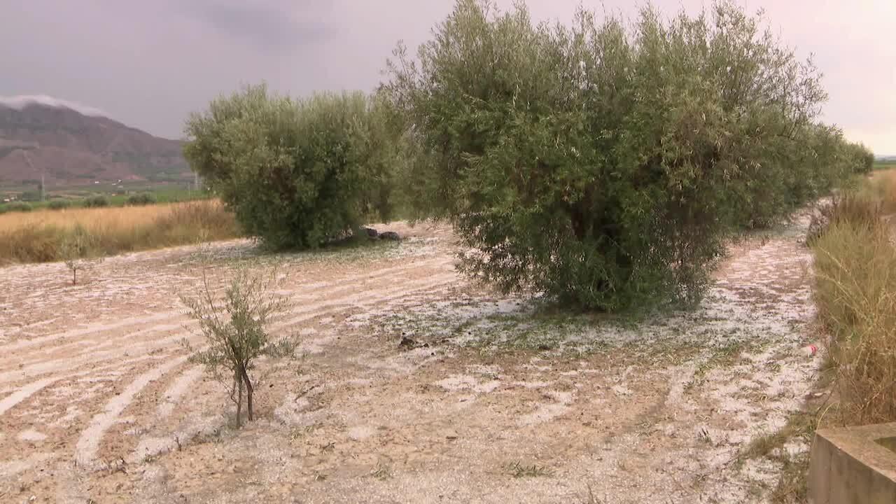La DANA arrasa els camps del Baix Segura
