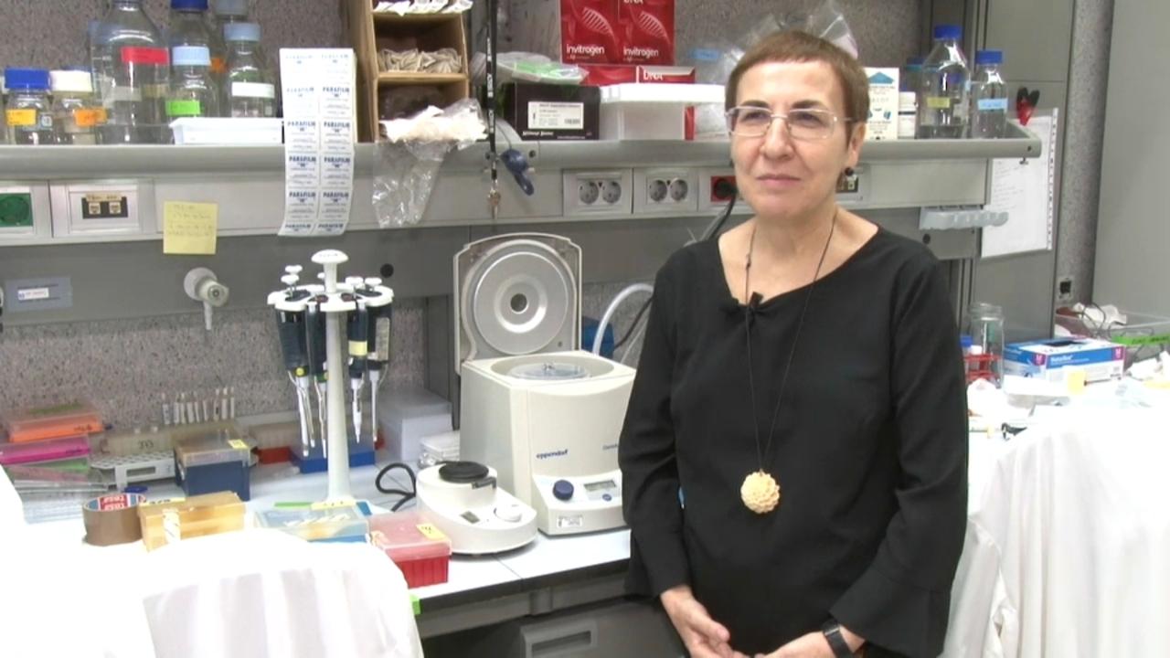 Pura Muñoz-Cánoves, premi Jaume I d'enguany en Investigació Mèdica