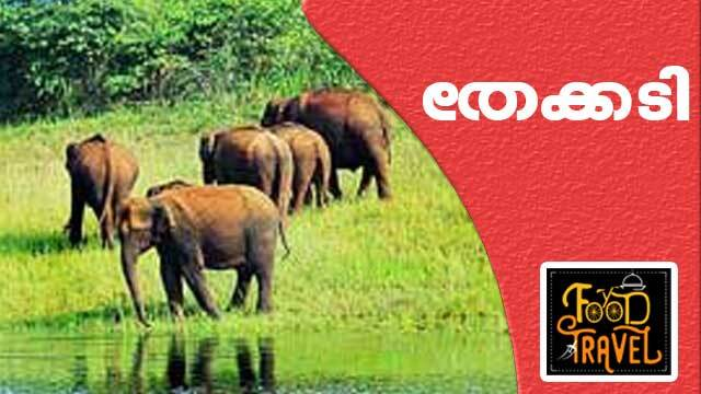 Thekkady Tour and Green Peppercorn Fish   Food N Travel
