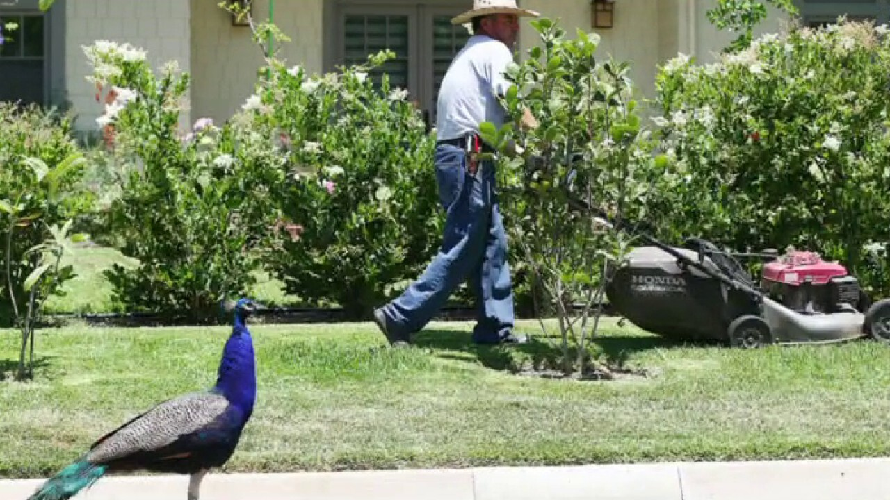 LA votes to ban people from feeding Peacocks