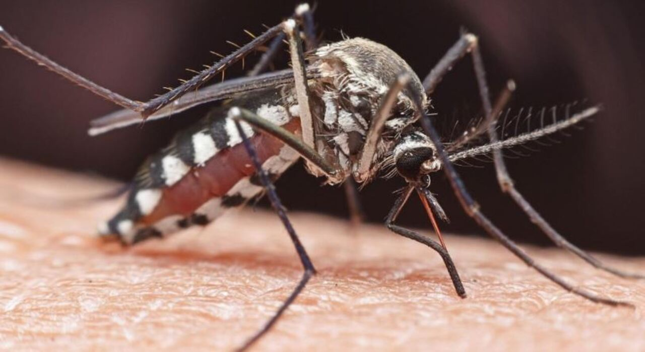Case of rare mosquito-borne EEE virus suspected in Michigan