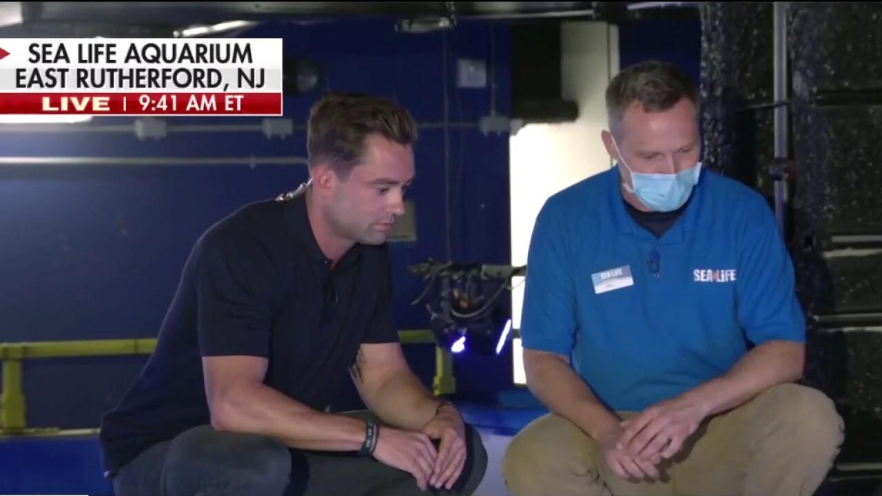 Adam Klotz feeds sharks at NJ Sea Life Aquarium